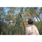 SILKY Longboy 3600-7.5  3 részes teleszkópos ágvágó 3 részes